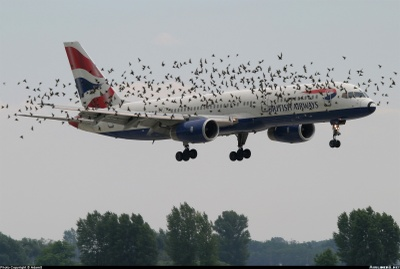 Birdplane_1